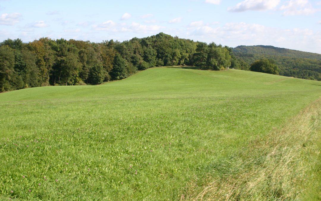 Flächenfraß – bald keine Weiden für Pferde?